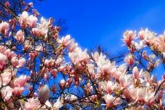 Frühlingsblüte 2020